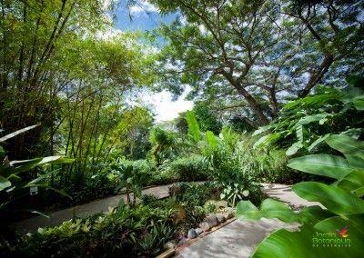 jardin-botanique-deshaies-guadeloupe-9 | Jardin tropical | Jardin ...