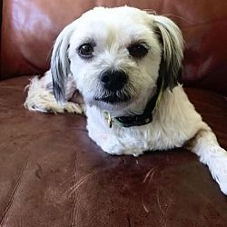 Available Pets At Rescue Dogs Rock Nyc Inc In New York New York Rescue Dogs Dog Adoption Dog Rocks