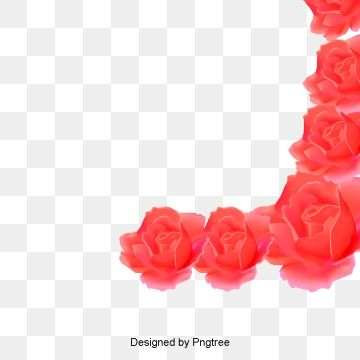 Illustration Petal Petals Transparent Material Rose Petals Falling Red Rose Petals Petals
