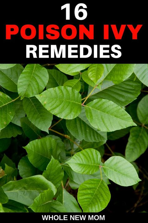 16 Home Remedies For Poison Ivy Plus Id And Prevention Tips Frugal