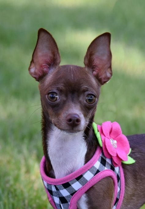 Adopt Fancy On Pets Rescue Dogs Animals