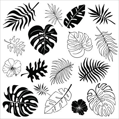 Flower Drawing Discover Isolated silhouettes of tropical palm leaves jungle leaves. Isolated silhouettes of tropical palm leaves jungle leaves. Vector set of hand drawn llustrations on white background. Watercolor Clipart, Watercolor Paintings, Leaf Drawing, Leaves Vector, Tropical Leaves, Free Vector Art, Doodle Art, Doodle Frames, Leaf Tattoos