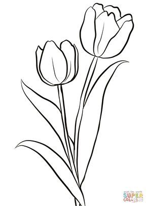 Two Tulips Coloring Page From Tulip Category Select From 28148 Printable Crafts Of Cartoon Tulip Drawing Printable Flower Coloring Pages Flower Coloring Pages