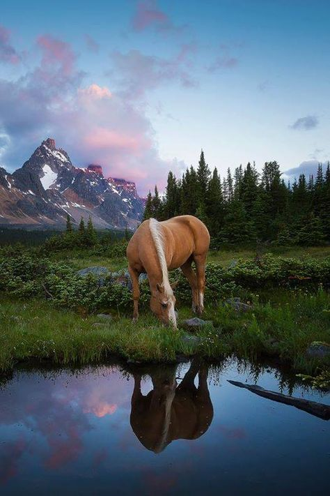 The Enchanted Cove: Palomino Horse Photo Most Beautiful Horses, All The Pretty Horses, Animals Beautiful, Cute Animals, Cute Horses, Horse Love, Horse Photos, Horse Pictures, Cavalo Wallpaper