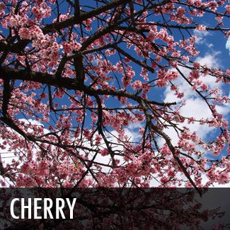 Cherry Tree Ornamental Trees Trees To Plant Landscaping Plants