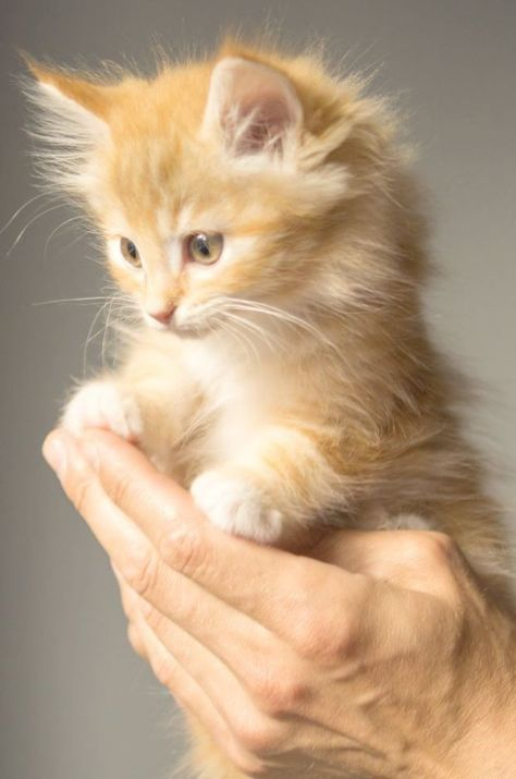 Kittens For Free Retford Cute Animals Small Upon Kittens Shots Cute Pictures Of Animals Easy To Draw Beside Ki Kittens Cutest Cute Cats Cute Cats And Kittens
