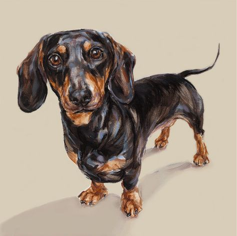 Dachshund art print  Ltd Ed Collectable by paintmydog on Etsy, $95.00