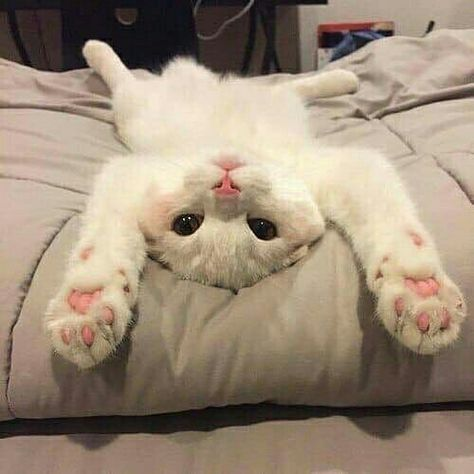 Cansei  @buddhaphunk  #gatos #cats #gato #cat #pets #GostoDisto