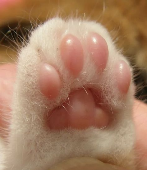 And underneath those paws...are TOE BEANS. 17 Things That Prove Cats Really Are The Cutest Specimens On The Planet