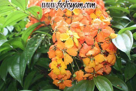 Gambar Bunga Tidak Warna Jenis Bunga Yang Menjalar Warna Oren Penelusuran Google 50 Gambar Bunga Mawar Tercantik Di Dunia Warna Pu Gambar Bunga Bunga Aster