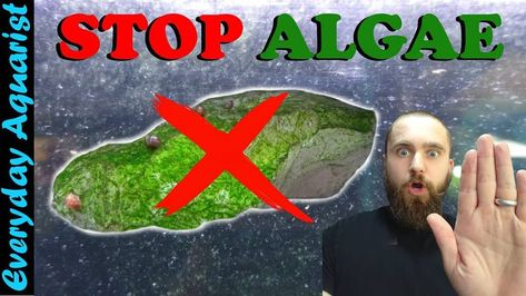 New video out tomorrow. Stop algae in both freshwater and saltwater aquaria. Don't forget to watch it!  #aquarium #fish #fishtank #aquascape #reef #aquariumhobby #freshwateraquarium #aquascaping #aquariumfish #freshwater #tropicalfish #plantedtank #aquariums #nature #reeftank #coral #reefers #plantedaquarium #animal #nature #marineaquarium #freshwaterfish #shrimp %2