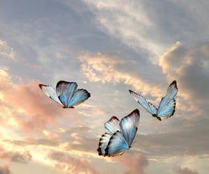 Cute Wallpaper Shared By Vʳ𝕒 On We Heart It Cute Laptop Wallpaper Beautiful Wallpapers Backgrounds Butterfly Wallpaper Iphone