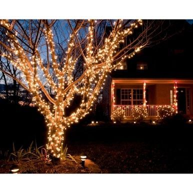 Indoor And Outdoor Battery Operated 400 Led Christmas Tree Lights Christmas Lights Outside Outdoor Christmas Lights Outdoor Christmas