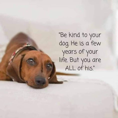 Dachshund – Friendly and Curious Cute Puppies, Cute Dogs, Dogs And Puppies, Dog Quotes, Animal Quotes, Dachshund Quotes, I Love Dogs, Puppy Love, Animals And Pets