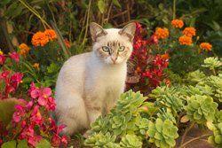 Katzen Aus Dem Garten Vertreiben 5 Effektive Tipps Blumenbeet Anlegen Katzen Baumtomate