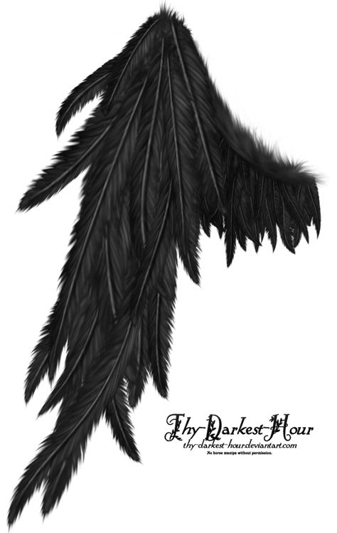 Draped Wing - Black by =Thy-Darkest-Hour on deviantART