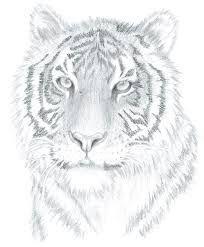3d Drawing Easy Keptalalatok A Kovetkezore Drawing Animals Step By