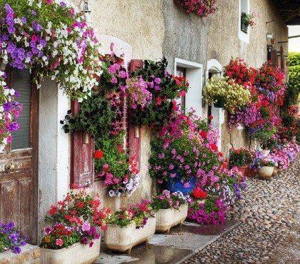 16+ Fleurs jardiniere plein soleil inspirations