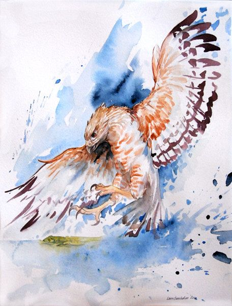 Red Shouldered Hawk - Archival Giclee Print watercolor bird of prey