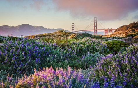Baker Beach and the Golden Gate Bridge from #treyratcliff at www.StuckInCustom... - all images Creative Commons Noncommercial.
