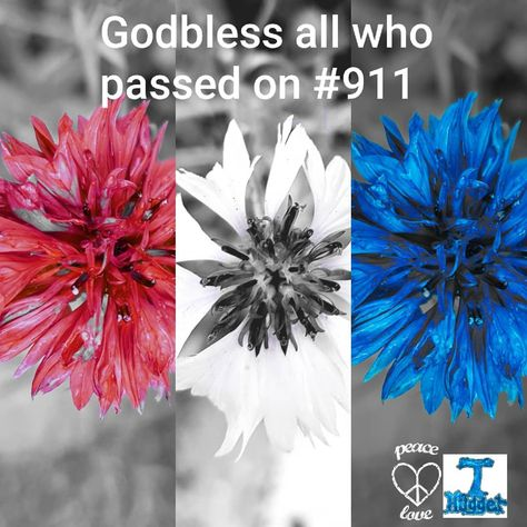 Blessings counted #911 . . . . .  #day #bloom #peace #mindfulness .#remembrance #blessing #live .#redwhiteandblue #usa #uk #lestweforget . #garden #gardens #gardening #pollinators #bees #savethebees #environment #plants #wildflower #wildflowers #colour #cornflower  #abstractart #art