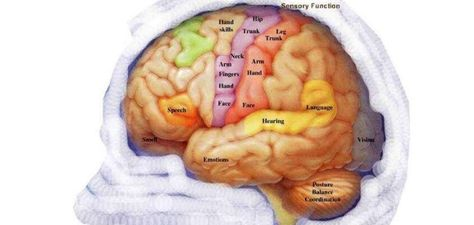 Miracles Of Quran Brain Function Quran Classes Miracles Of Quran Brain Function Quran