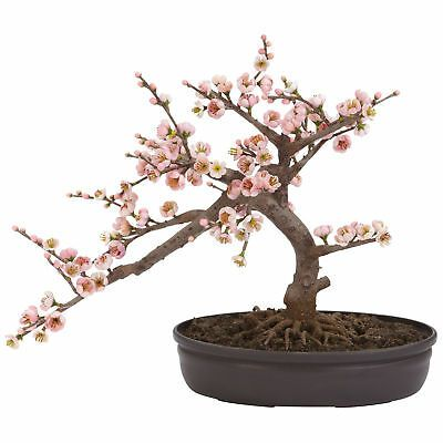 Artificial 15 Pink Cherry Blossoms Silk Flowers Bonsai Tree Cherry Blossom Bonsai Tree Bonsai Trees For Sale Bonzai Tree