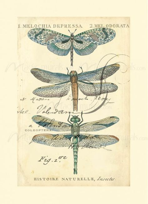 Dragonfly Ephemera I - inspiration only. Free Printable