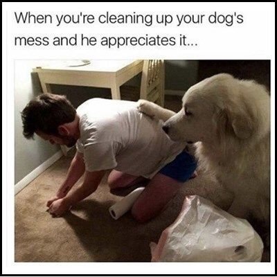 22 Dog Memes That Prove We Don T Deserve Those Adorable Little Dummies Memebase Funny Memes Dogcostumes Dog Throwing Up Dog Mess Funny Dog Memes