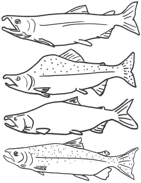 Guided Salmon Fishing In Cooper Landing Fish Coloring Page