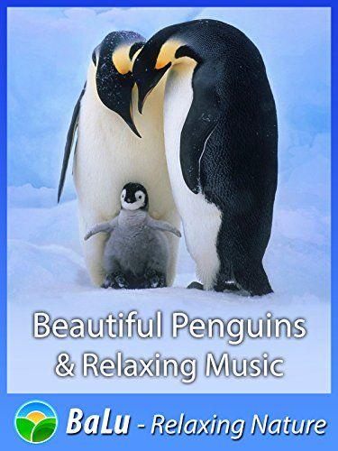 Beautiful Penguins Relaxing Music BaLu Relaxing Nature