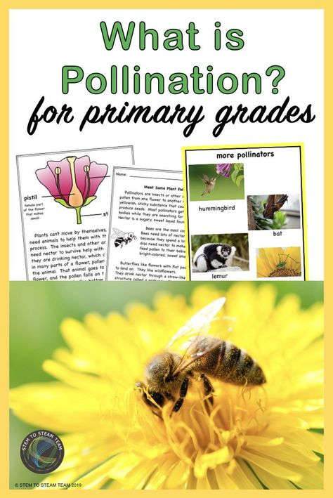 Pollination For Kids Pollination Activity Pollination Pollination Lessons