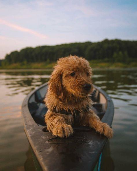 CLIQUEZ sur l'image pour obtenir aujourd'hui votre certification d'entretien canin. Etes vous prêts à entretenir un chien ? Préparons l'arrivée du chien. Qui dois-je être pour mon chien ? Je respecte mon chien. Votre chien et vos enfants. Comment bien communiquer avec votre chien ? 15 idées reçues sur les chiens. L'alimentation de mon chien. Où aller chercher mon chien ? Choisir mon chiot. FÉLICITATIONS POSITIVES pour votre chien. Doggy List. Crédit photo : @yorkiesgang @barked @dogsthathike