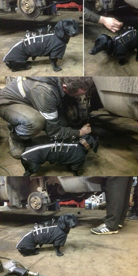 Super Adorable Dog Decides To Help Daddy And Be A Mechanic Super