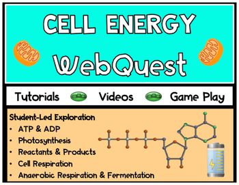 Cell Energy Webquest Comparing Cell Respiration And Photo Cell Respiration Photosynthesis And Cellular Respiration Photosynthesis