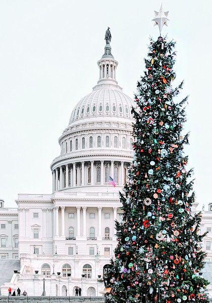 Washington Dc Laurie Collins In 2020 Washington Dc Christmas Christmas Tree