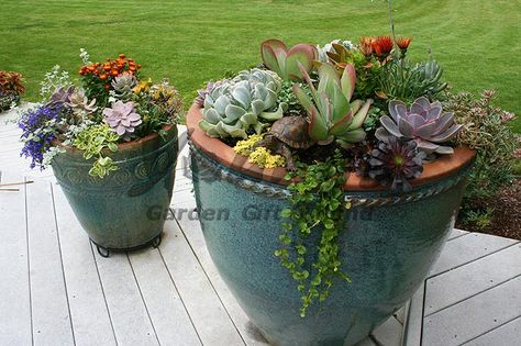Backyard ideas on pinterest succulents plants and for Low maintenance flowers for pots