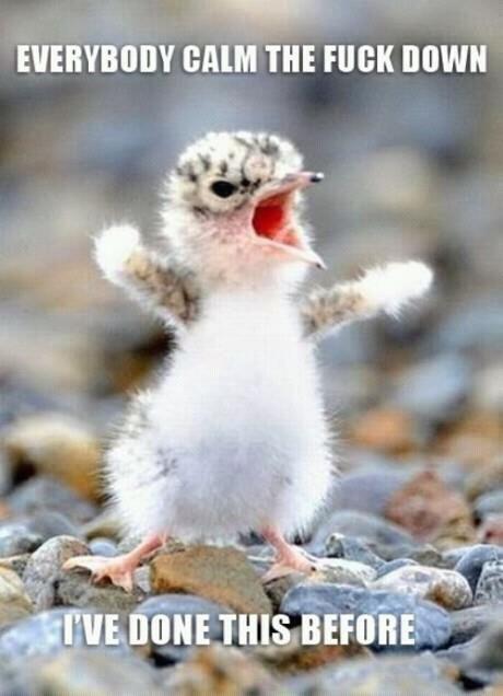 Everybody Calm Down Meme : everybody, Down!, Ideas, Calm,, Bones, Funny,, Funny, Animals