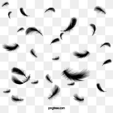 Float Black Feather Effect Black Clipart Feather Clipart Wings Feathers Falling Feather Graphic Feather Background Graphic Design Background Templates