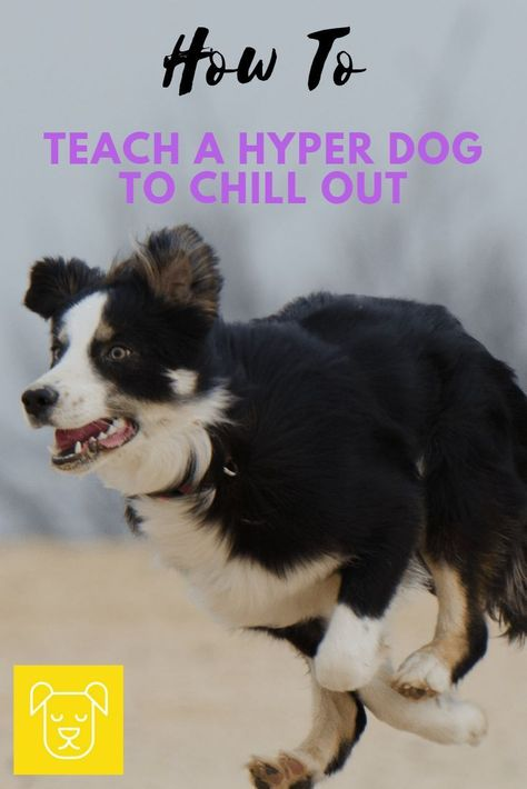 How To Teach a High-Energy Dog to Chill Out