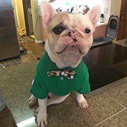 Amazon Com Pet Stretch Polo Shirt 2017 New Design 14 Pink Pet Supplies Pets Pet Supplies Bulldog