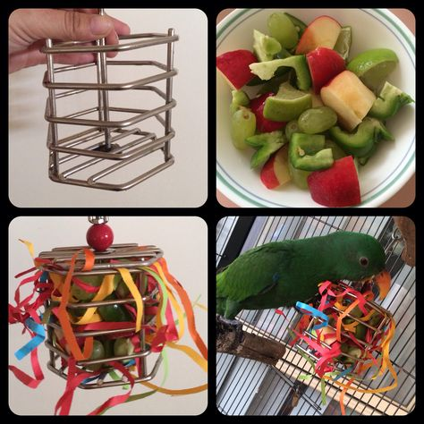 This is a foraging toy for my Eclectus parrot, Apollo. It's a small stainless steel barrel cage filled with diced apple, green capsicum, limes and green grapes, along with shredded bird-grade coloured paper. This keeps him entertained for hours. When he's finished, I remove and wash for the next time. Barrel cage cost $41.95 from a local pet shop.