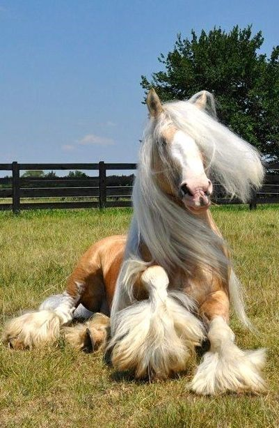 20 Horses With The Most Fabulous Hair You Have Ever Seen - I Can Has Cheezburger?