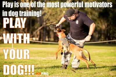 Motivation Problems In The Heeling Exercise Dog Training Dogs
