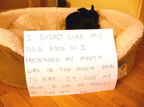 Dog Shame | I didn't like my dog food so I pretended my mouth...