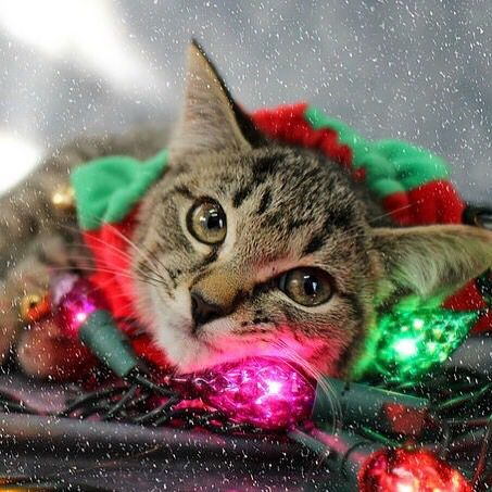 Need Help Decorating Then I M Your Girl I Love To Get All Wrapped Up In The Spirit Of The Season All I Need Now Is Dog Adoption Animal Rescue Cat Adoption