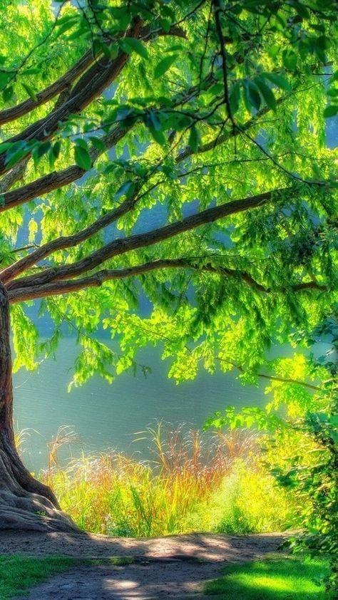 Nature Green Tree Natural Landscape Vegetation Natural Environment In 2020 Best Background Images Beautiful Images Nature Dslr Background Images