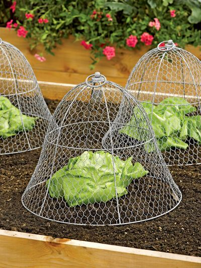 Wire Cloche by Colonial Tin Works Gardener's Supply is part of Vegetable garden design - In the garden, this chicken wire cloche protects plants from nibbling wildlife and curious cats Indoors, transform decor from ordinary to delightful Backyard Vegetable Gardens, Vegetable Garden Design, Veg Garden, Garden Soil, China Garden, Chicken Garden, Garden Plants, Potager Garden, Chickens In Garden