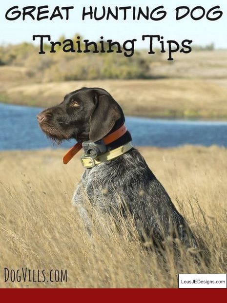 How To Train A Dog Not To Bark At Other Dogs When Walking And Pics