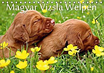 Magyar Vizsla Welpen Tischkalender 2020 Din A5 Quer Kalender In 2020 Vizsla Welpen Vizsla Und Welpen